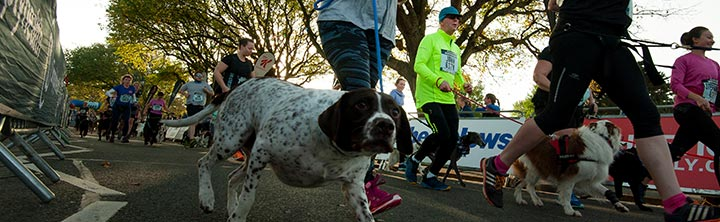 Simplyhealth Canine Run
